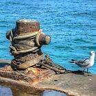 Seagull at Potter&#x27;s Cay in Nassau, The Bahamas by 242Digital