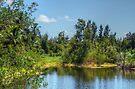 The lake at Paradise Island in Nassau, The Bahamas by 242Digital