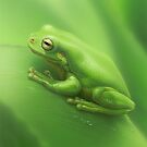Green Frog #3 by Christopher Pope