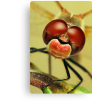 Dragonfly close-up Canvas Print