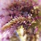 wisteria by Karin  Taylor