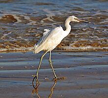 Egret by venny