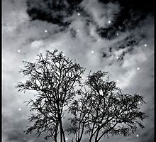 Branches to Heaven by DFLCreative
