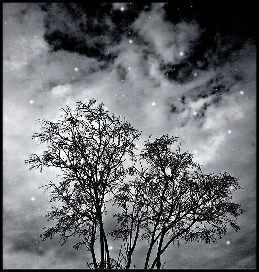 Branches to Heaven by DFLC Prints