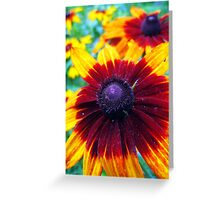 summer of susans 2 Greeting Card