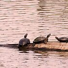 Turtle Talk by Lisa McIntyre