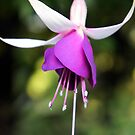 Hanging Beauty by orko