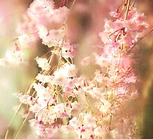 A Blur Of Pink Weeping Willow by daphsam