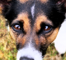 Jessie the Jack Russell Terrier: It's All About the Ball Sticker