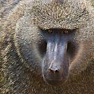 Baboon, Ngorongoro Crater, Tanzania by Neville Jones