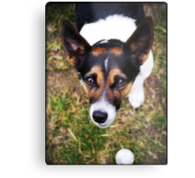 Jessie the Jack Russell Terrier: It's All About the Ball Metal Print