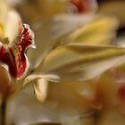 Orchid Impressions by yolanda