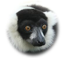 Lemur iPhone Case by flashcompact