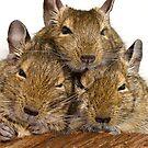 Dozing Degu Trio by Lisa Marie Robinson