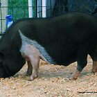 Pretty Piggy by PixByNancy