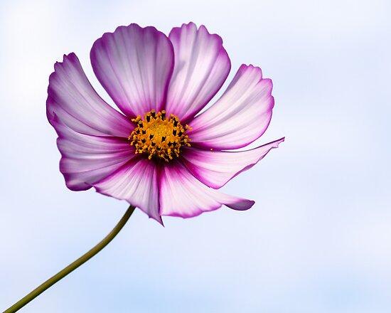 Flower   by Karen Havenaar