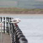 Gull on the Rails by missmoneypenny