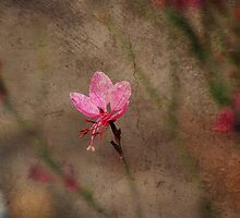 """"""" A leaf , a flower and a stone """" by CanyonWind"""
