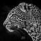 WILD AFRICA (2/day, please no series of same subjects) Nothing Man made!!