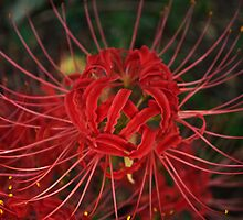 Tangled in Color by Lisa Holmgreen