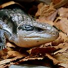I'll Just Slide Past You... Blue Tongued Skink - NZ by AndreaEL