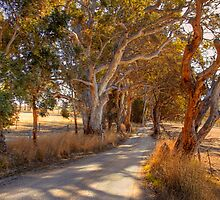Woodside II, The Adelaide Hills, SA by Mark Richards