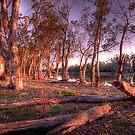 Summer Scene - The River Murray, Renmark, South Australia by Mark Richards