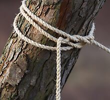 Boys Scout Rope by brijo