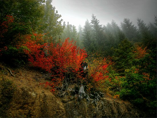 The Hills Are Alive With The Sound Of Fall by Charles & Patricia   Harkins ~ Picture Oregon