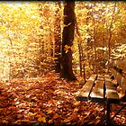 A Forest Bench in a Fall Scene by Chantal PhotoPix