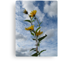 Flower in Sky Canvas Print