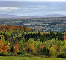 Evergreen Trees nestled among colorful Fall Trees by Chantal PhotoPix