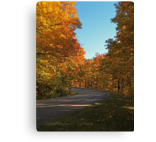 A Country Road lined with Yellow Leaved Trees Canvas Print