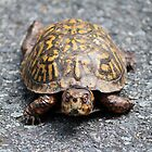Brown & Yellow Turtle by Cynthia48