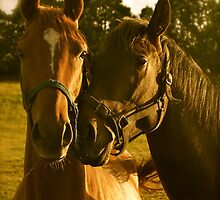 Perfecting The Pose- (Thoroughbred Mares) by Lou Wilson