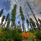 Tall Timber by Charles &amp; Patricia   Harkins ~ Picture Oregon