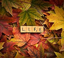 LIFE-Autumn by onyonet photo studios