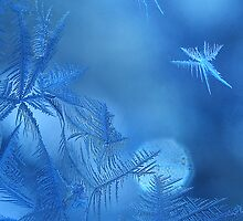 Blue Fairies by milkayphoto