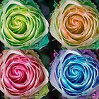 Colorful Rose Spirals by Bo Insogna