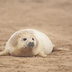 Seal pup by Colin Edwards
