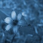 Feeling Blue by Jennie L. Richards
