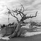 Hanging Tree -  Virginia City, Nevada by Harry Snowden