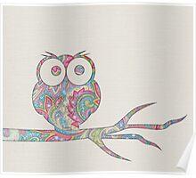 Owl pirch Poster