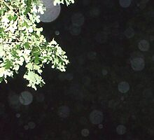 Orbs ----Not On Lense by PaulCoover