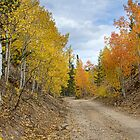 Colorado Rocky Mountain Colorful Autumn Back Road by Bo Insogna