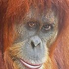 An Orang-utan Observing You by Margaret Saheed
