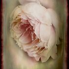 Faded beauty by Chris Armytage