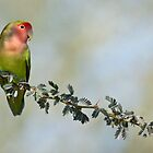 Love bird by Bryan  Keil