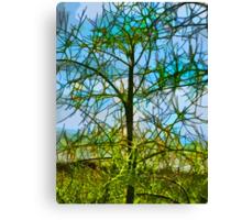 Nature's Church Windows  Canvas Print