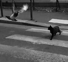 Priorité au chat by Glonadine